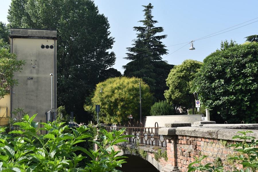 Koelreuteria paniculata Via Cornaro