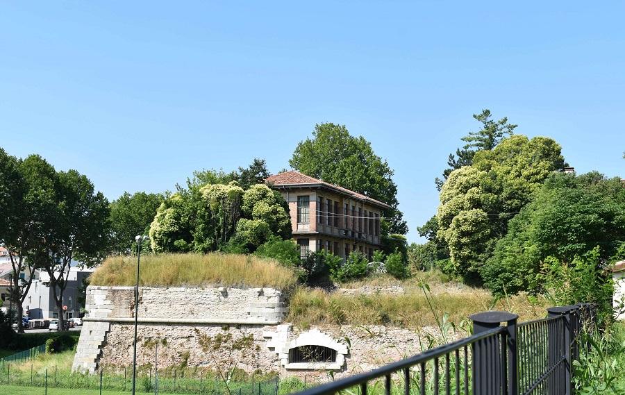Ligustrum Bastione Santa Croce