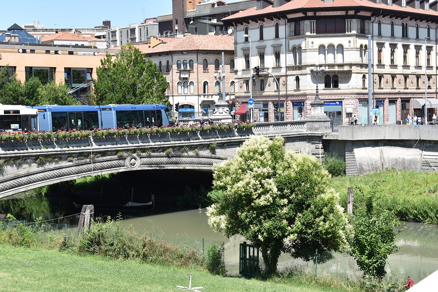 Ligustrum Ponte del Popolo
