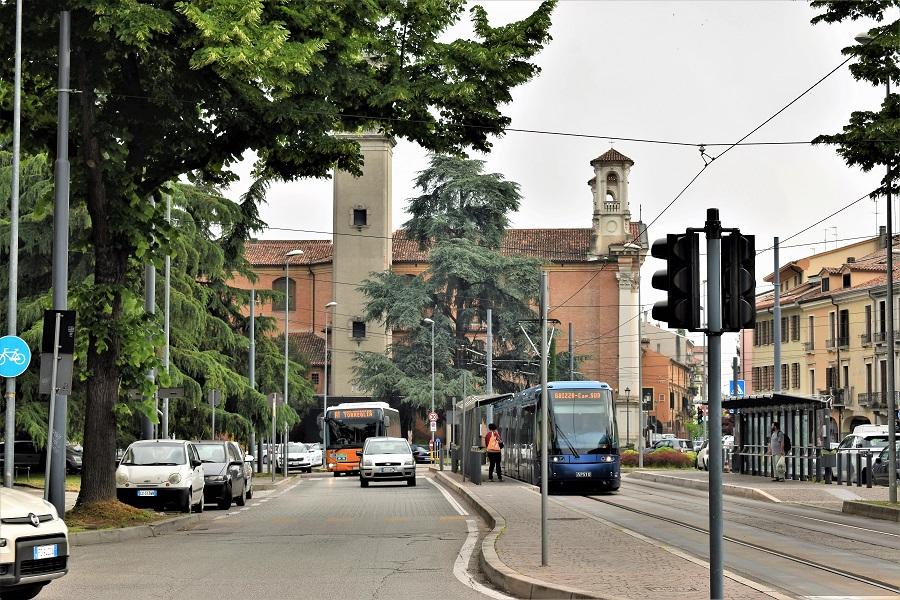 Cedrus atlantica Santa Croce