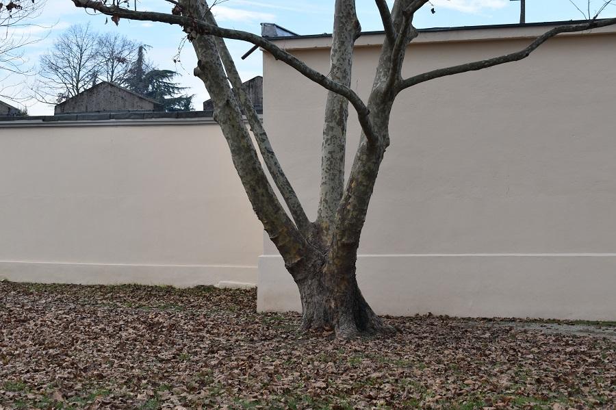 scultura arborea 14