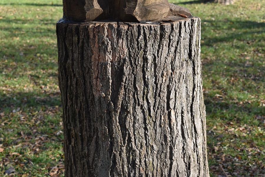 scultura arborea 3