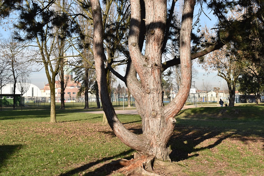 scultura arborea 5
