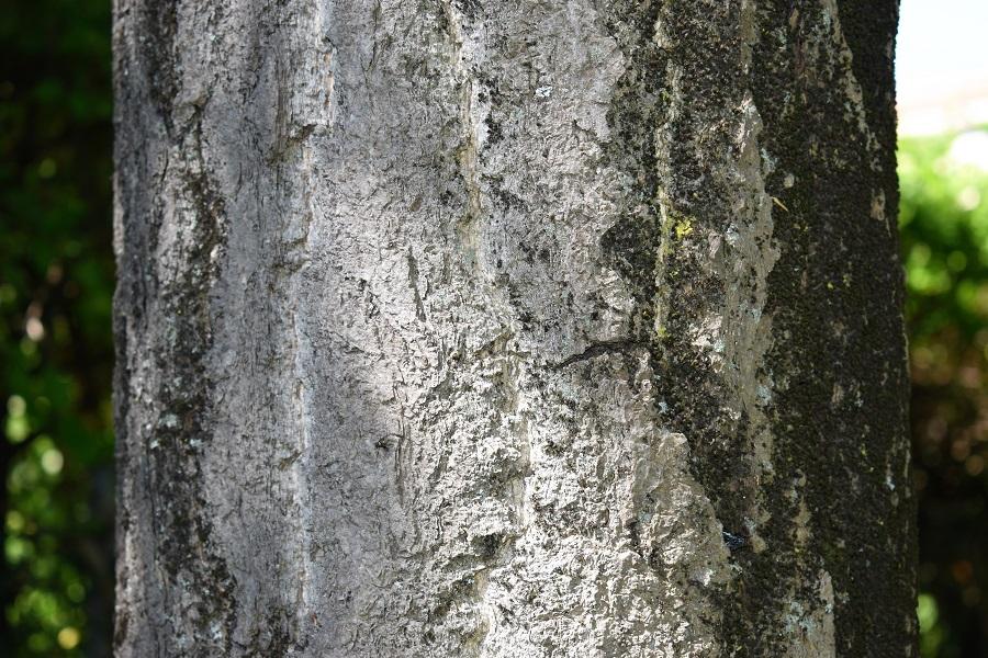Corteccia 2