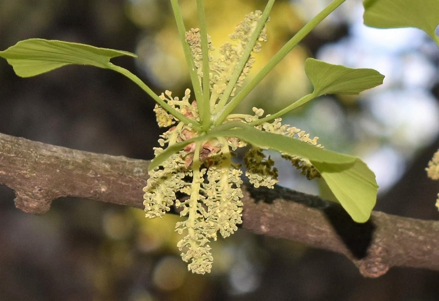 Fiore 4