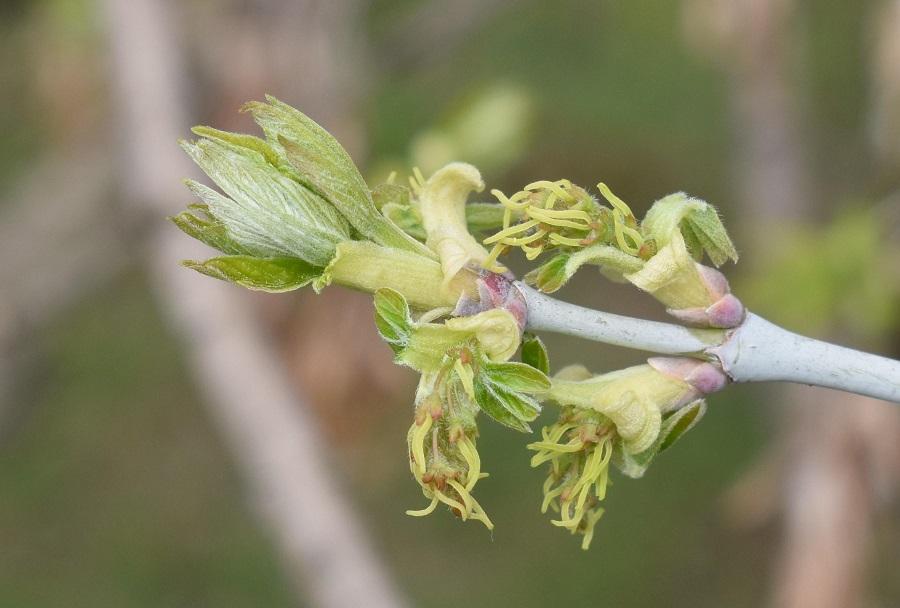 Fiore f 4