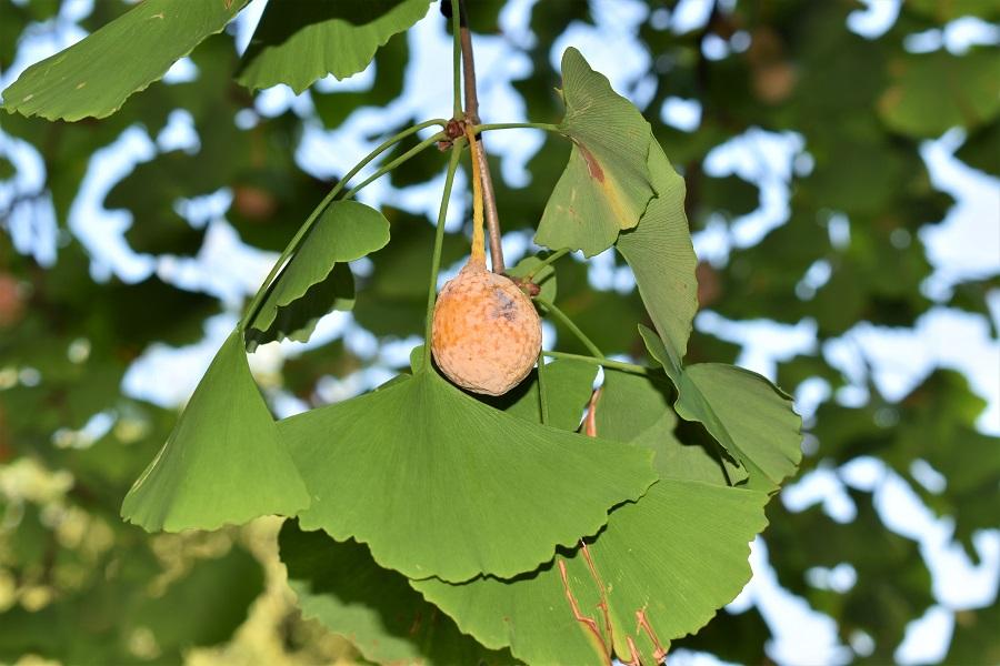 Frutti 2.jpg