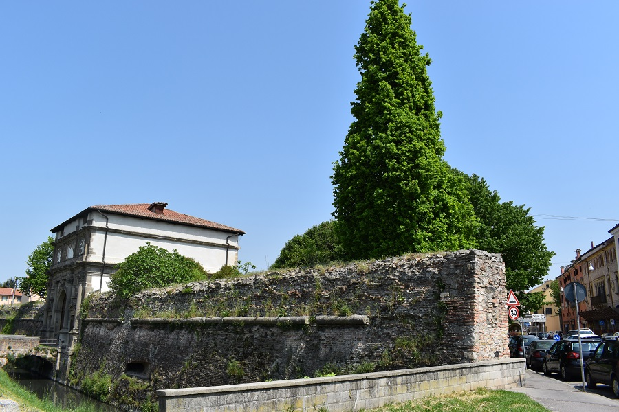 Quercus robur fastigiata 2