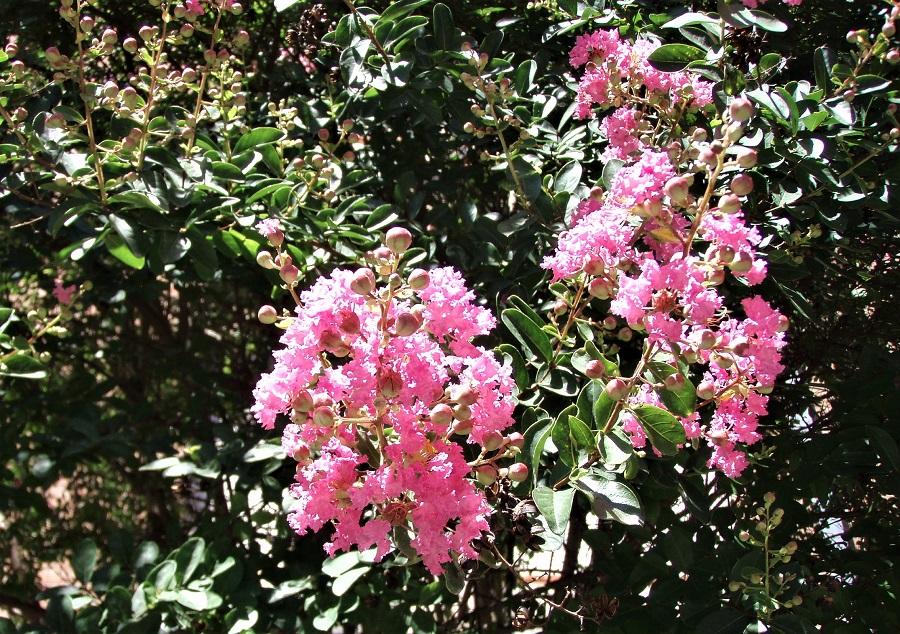 fiore 3
